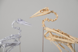 The Morus Serrator Project, Geoffrey Roche, Australasian gannet skeleton maquette, New Zealand multi media fine artist, Gilberd Marriott Gallery Wellington NZ,